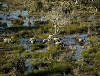 botswana-by-wilderness-safaris